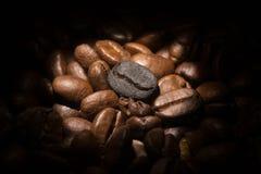 Geroosterde geïsoleerde koffiebonen, vers Stock Afbeelding