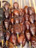 Geroosterde gebraden insecten en schorpioenen en insecten Royalty-vrije Stock Foto's