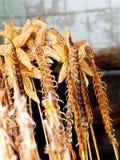 Geroosterde gebraden insecten en schorpioenen en insecten als foo van de snackstraat Royalty-vrije Stock Foto