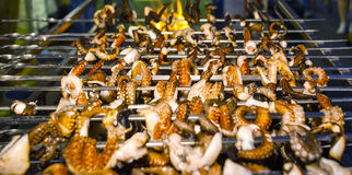 Geroosterde geroosterde octopus Royalty-vrije Stock Fotografie