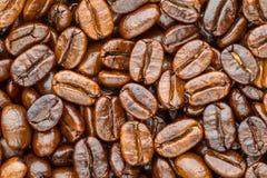 Geroosterde koffiearabica Royalty-vrije Stock Foto's