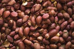 Geroosterde noten tot gouden species Stock Fotografie