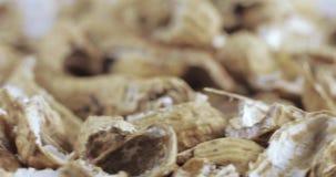 Geroosterde pindashells stock video