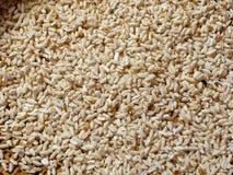 Geroosterde rijst Stock Fotografie