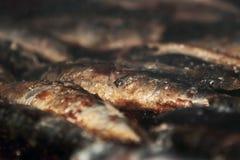 Geroosterde sardines Royalty-vrije Stock Afbeeldingen