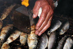 Geroosterde sardines Stock Afbeeldingen