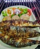 geroosterde sardines met gekookte aardappels en salade in witte plaat klaar aan gediend royalty-vrije stock fotografie