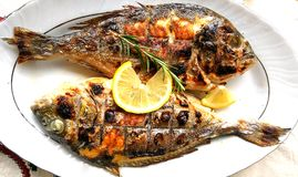 Geroosterde vissen, overzeese brasem, dorada op de plaat royalty-vrije stock afbeelding