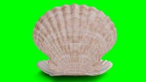 Geroteerde parel binnen overzeese die shell op een groene achtergrond wordt geïsoleerd De parels van de juwelenparel De briljante royalty-vrije illustratie