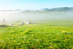 The gers and fog on the grassland Royalty Free Stock Image