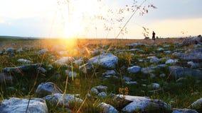 Gerste in Tibet im Sonnenaufgang Lizenzfreie Stockfotos
