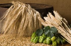 Gerste und Weizen Stockfoto