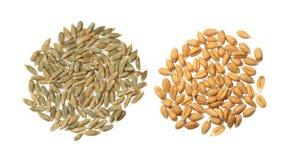 Gerste und Weizen Stockfotos