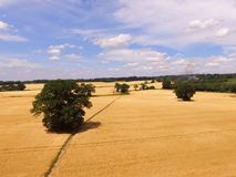 Gerstenerntefeld in Süd-England Stockbild