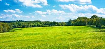 Gerstenfelder, die mitten in Holz undulating sind stockfotos
