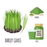 Gerstengrassatz mit Pulver und grüner Saft in der flachen Art lokalisiert auf Weiß Stockfotos
