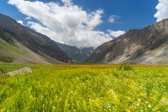 Gerstenreisfeld bei Sonamarg, Srinagar, Jammu Kashmir, Indien Lizenzfreie Stockfotos