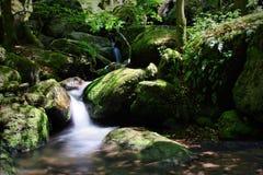 Gertelbachwatervallen, Zwart Bos, Duitsland Stock Afbeeldingen