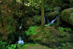 Gertelbachwatervallen, Zwart Bos, Duitsland Royalty-vrije Stock Foto