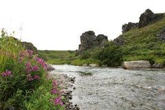 Gertrude Creek, Alaska. Royalty Free Stock Photos