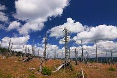Geruïneerde bos en verbazende hemel stock foto's
