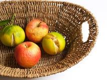 Geruïneerde fructus Stock Afbeelding
