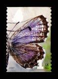Geruite blauwe Scolitantides-orion, Vlinders serie, circa 2007 royalty-vrije stock foto's