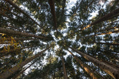 Gesägt meldet einen Wald an Stockfoto