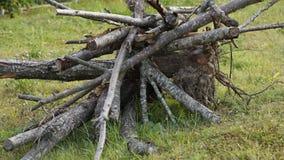 Gesägte Bäume Stockbild