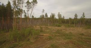 Gesägte Baumfälle Waldausschnitt stock video footage
