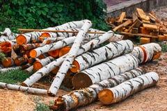Gesägte Birkenklotz Detailansicht von Woodpile des runden Brennholzes aus den Grund stockfotografie