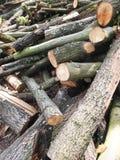 Gesägtes Holz Stockbilder
