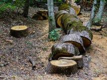 Gesägtes Holz Lizenzfreie Stockfotos