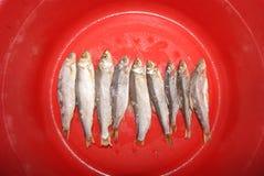 Gesalzene Fische lizenzfreie stockbilder