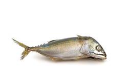 Gesalzene Makrelenfische auf weißem Hintergrund Stockbild