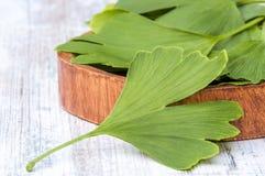 Gesammelte medizinische Blätter des Ginkgo biloba Baums in einer Schüssel auf dem Tisch hölzern stockfotos