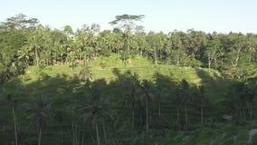 Gesamtlänge über Reisterrasse und Palmen des Berges und Haus von Landwirten bali indonesien stock video footage