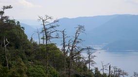 Gesamtlänge genommen von einer Drahtseilbahn über einer großen bewaldeten Waldfläche auf der japanischen Insel von Miyajima stock footage