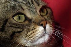 Gesamtlängenclip eines Katze ` s Gesichtes Stockbild