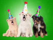 Gesang-Geburtstag-Welpen-Hunde Stockbilder
