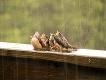 Gesang im Regen Lizenzfreie Stockfotografie