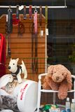 Gesch?ft- f?r Haustierefenster in Malm? lizenzfreies stockbild