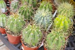 Geschäft im Freien von Succulents Lizenzfreies Stockfoto