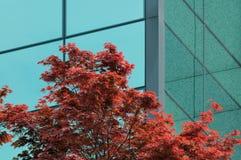 Geschäft und Natur Lizenzfreies Stockfoto
