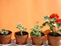 Geschäfte und Blumen. Stockfoto