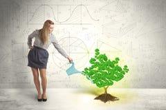 Geschäftsfrau, die einen wachsenden grünen Dollarzeichenbaum wässert lizenzfreie stockfotos