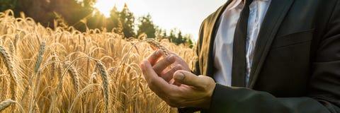Geschäftsmann, der ein reifes Ohr des Weizens höhlt lizenzfreies stockbild