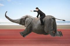 Geschäftsmann mit dem Zeigen des Fingergestenreitens auf Elefanten Stockfotos