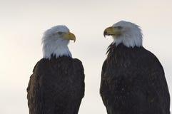Geschäftstreffen zwischen zwei Eagles Stockbild