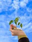 Geschäftswachstumperspektive Stockfoto